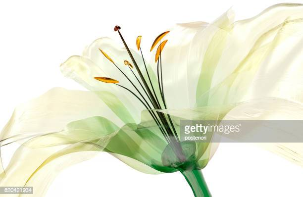 glass flower isolated , the lily flower