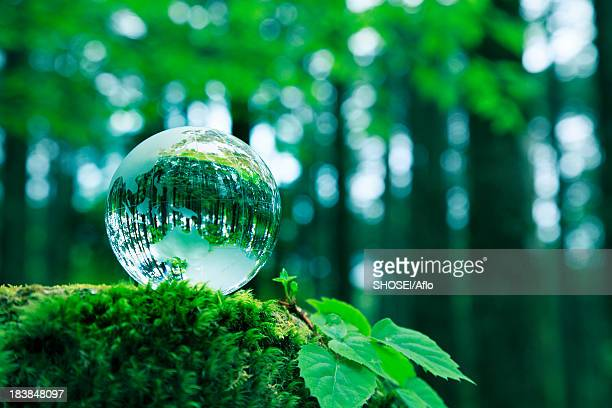 glass globe - snag tree stock pictures, royalty-free photos & images