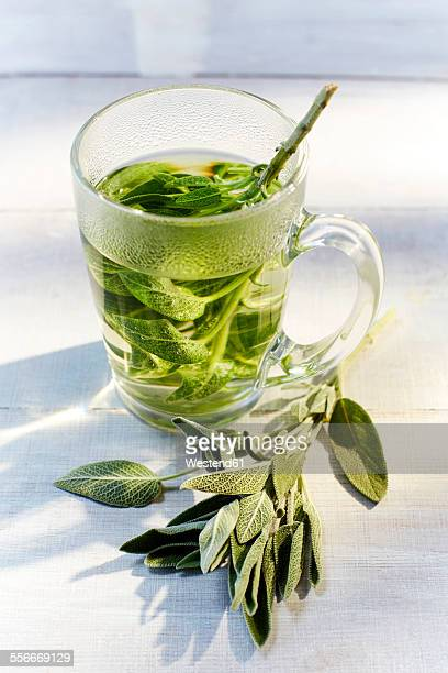 Glass of hot sage tea and fresh sage