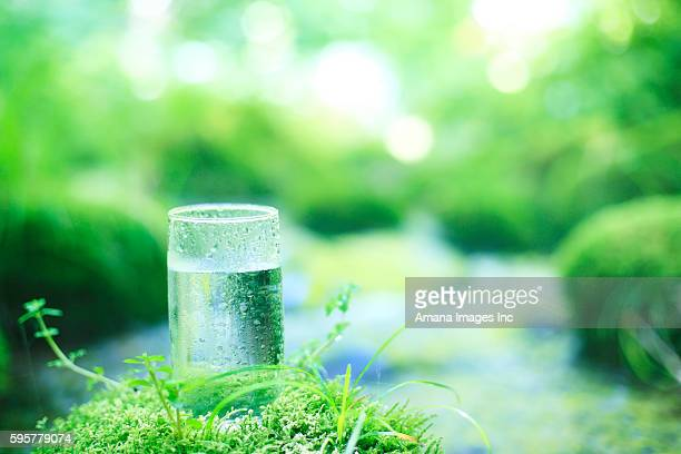 glass of water on mossy stone by stream - 鳥取県 無人 ストックフォトと画像