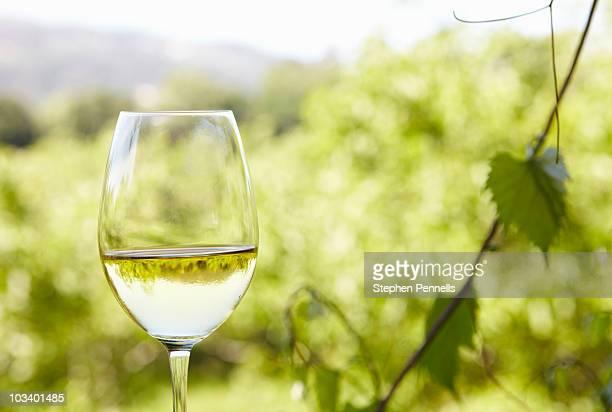 glass of white wine at vineyard