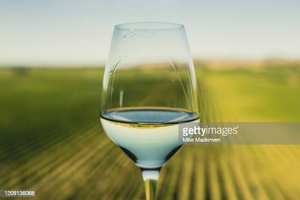 glass of wine over a new zealand vineyard - marlborough new zealand stock pictures, royalty-free photos & images