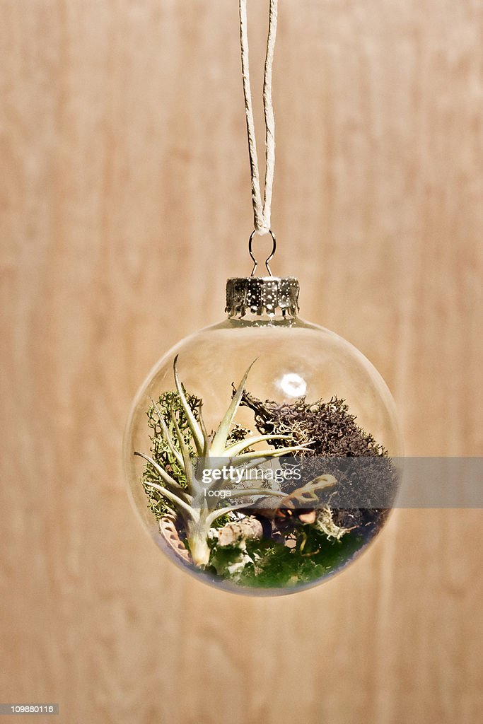 Glass ornament with nature habitat growing inside : Stock Photo