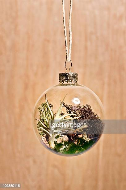 Glass ornament with nature habitat growing inside