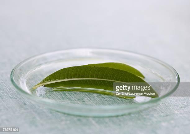 Glass plate holding lemon verbena leaves