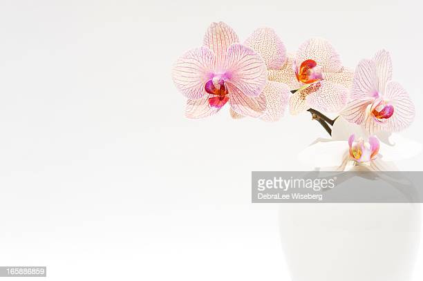 Orchid In Vase Stock Photos And Pictures Getty Images
