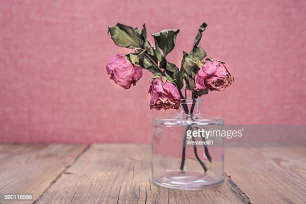 Glass vase with three withered roses