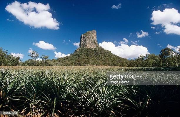 glasshouse mountain and pineapple field - glass house mountains stock pictures, royalty-free photos & images