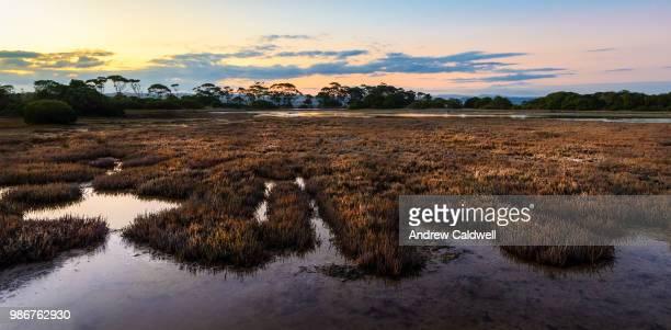 Glasswort Fields