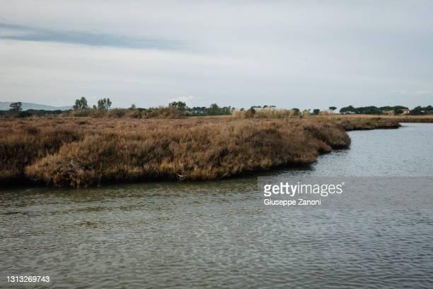 glasswort landscape - orbetello bildbanksfoton och bilder