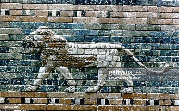 Glazed terracotta lion from the processional way from the Temple of Marduk to the Ishtar Gate one of the eight fortified gates of Nebuchandrezzar's...