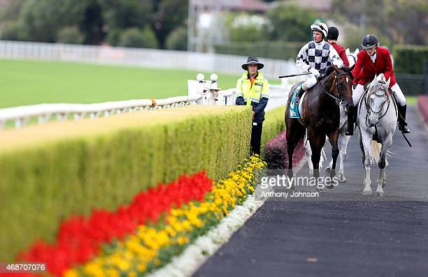 Glen Boss returns on Miss Cover Girl after winning race 5 The P J Bell Stakes during Sydney Racing at Royal Randwick Racecourse on April 6 2015 in...