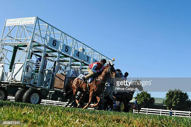 Glen Boss riding Chivalry jumps out of the barriers in heat 15 during the 800 metre barrier trials on the course proper at Flemington Racecourse on...