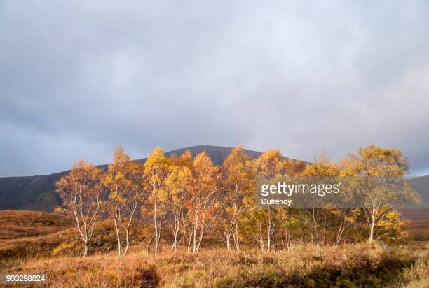 Glencoe, Lochan
