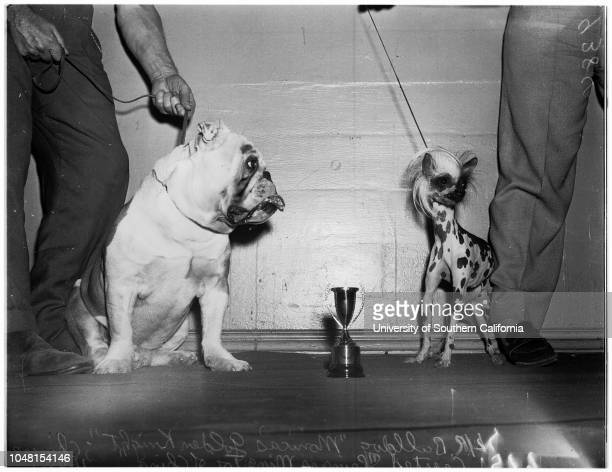 Glendale Kennel Club Show 04 November 1951 Bulldog 'Monica's Golden Knight'Chinese Crested 'Princess Ming Toy of China'Poodle 'Meisen's Princess...