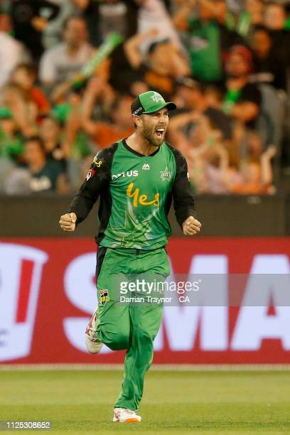 Glenn Maxwell of the Melbourne Stars celebrates the wicket of Ben Cutting of the Brisbane Heat during the Big Bash League match between the Melbourne...