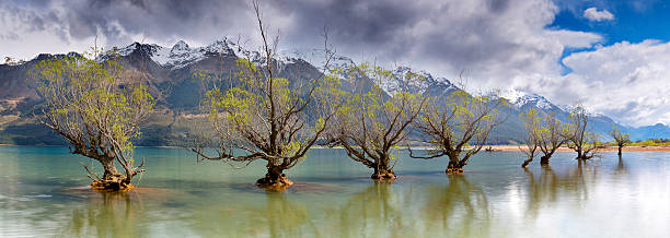 Glenorchy old trees as storm front approaches
