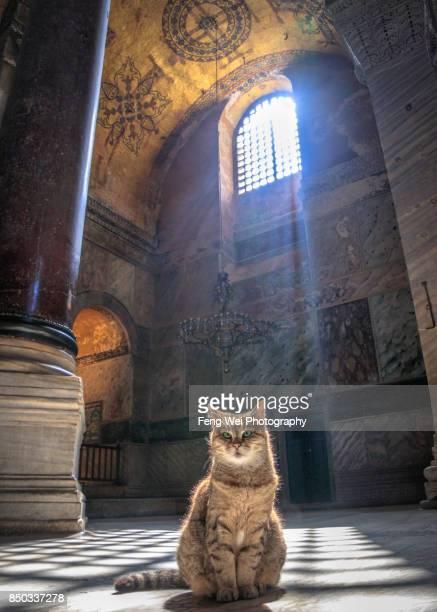 gli the loyal cat, hagia sophia, istanbul, turkey - hagia sophia istanbul foto e immagini stock