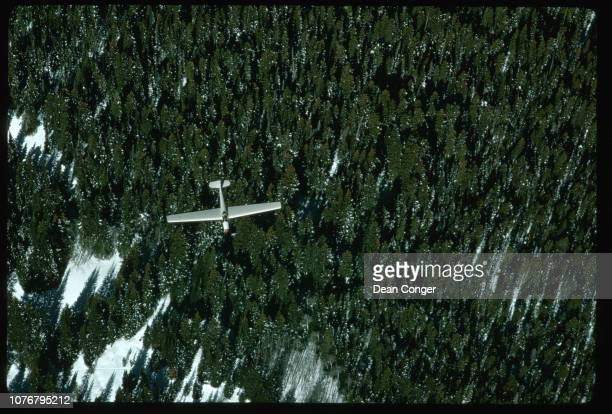 Glider Flying Over Coniferous Forest