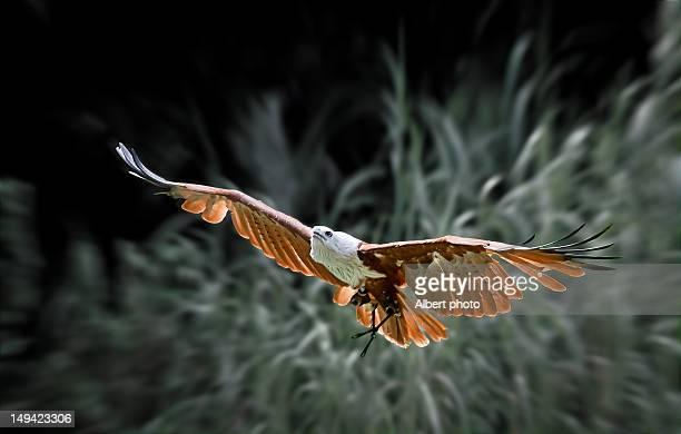 Gliding bird