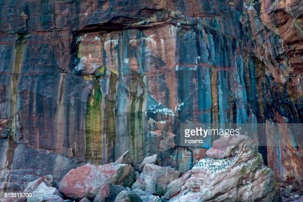 Un aperçu à l'une des falaises de l'île Bonaventure où le fou de Bassan et le Guillemot marmette, également appelé Guillemot de Troïl, peut être vu chez les autres espèces.