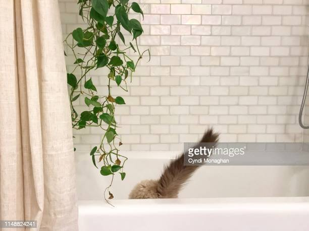 glimpse of a cat tail peeking out of a bathtub - funny cats stock pictures, royalty-free photos & images