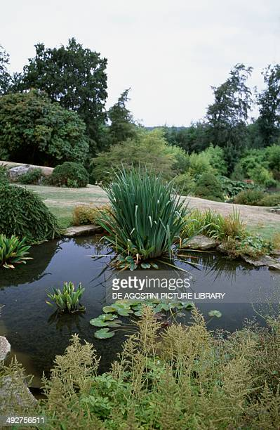 Glimpse of a garden with a pond and water plants