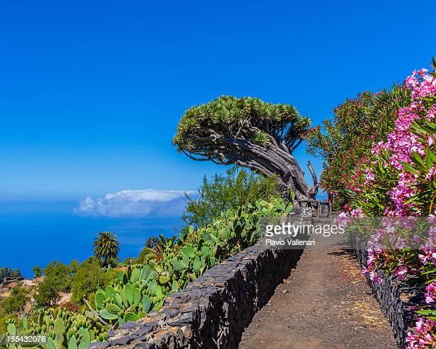 Eindruck von La Palma, Kanaren