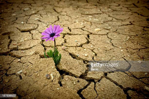 global warming - enkele bloem stockfoto's en -beelden