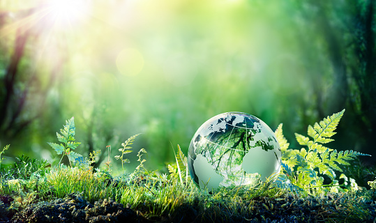 Globe On Moss In Forest - Environment Concept 943875208
