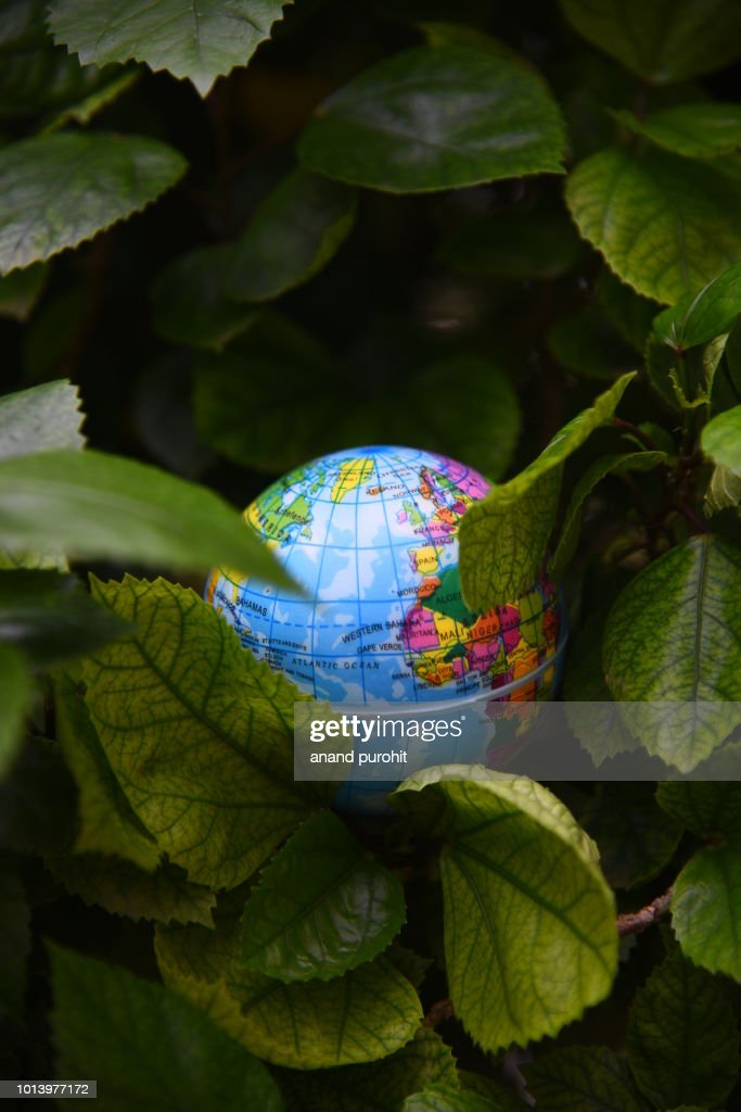 Globe or Earth in Green Leaves Background - World Environment Day : Stock Photo