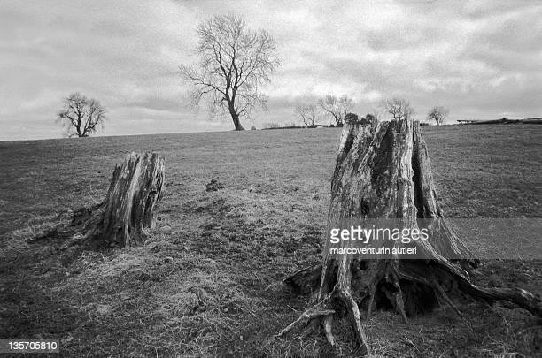 gloomy trees in english moor - marcoventuriniautieri stock pictures, royalty-free photos & images