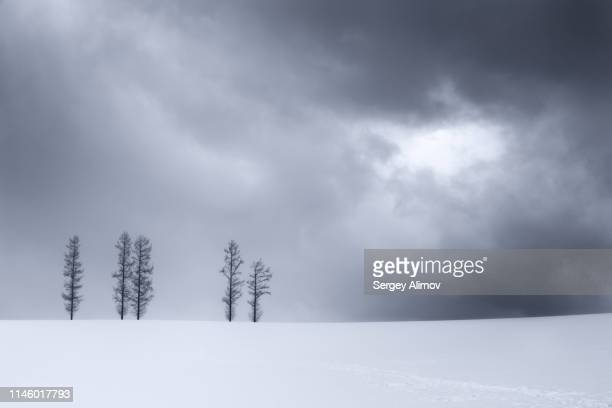 gloomy weather over snowy field near asahikawa - humid stock pictures, royalty-free photos & images