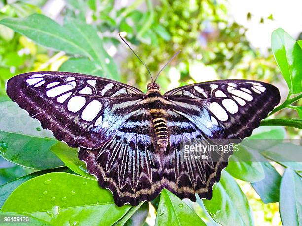 glorious butterfly - ken ilio stock pictures, royalty-free photos & images