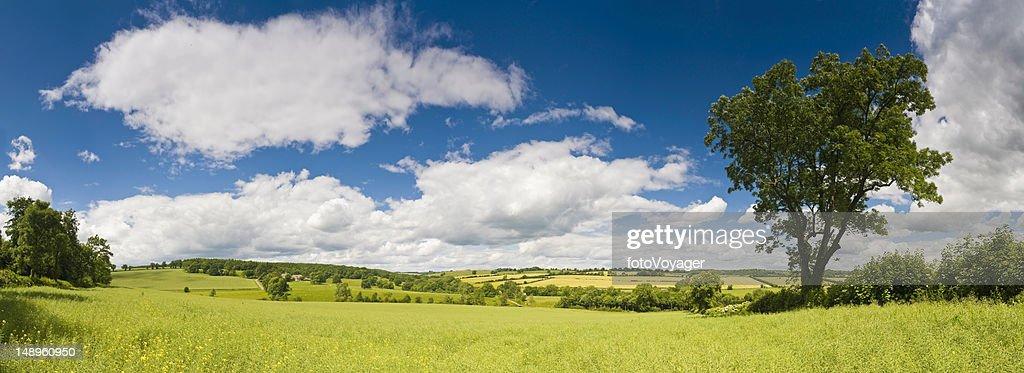 な夏の牧草地の眺め : ストックフォト