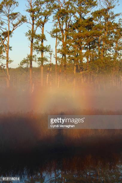 a glory or optical phenomenon around a person's shadow - light natural phenomenon stock pictures, royalty-free photos & images