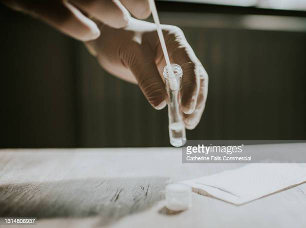 gloved hand dips a cotton swab in a transparent tube in clear solution - epidemiology stock pictures, royalty-free photos & images