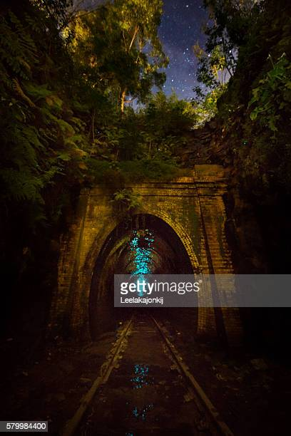 glow worms tunnel - glowworm stock pictures, royalty-free photos & images