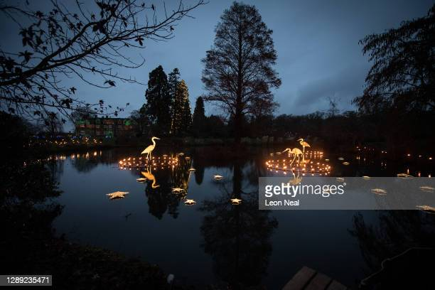 """Glowing birds are seen within rings of fire on a pond during the launch of """"Glow Wild"""" at Wakehurst on December 03, 2020 in Haywards Heath, England...."""