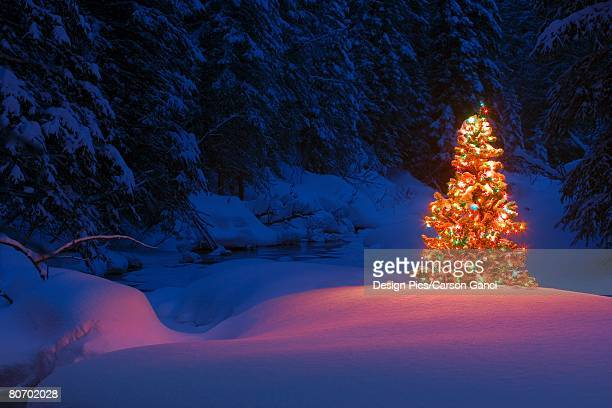 Glowing Christmas tree in forest