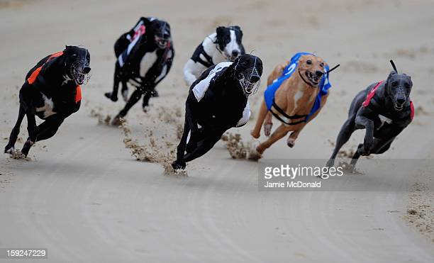 Glowing Cnoc wins Race 4 at Romford Greyhound Stadium on January 10 2013 in Romford England
