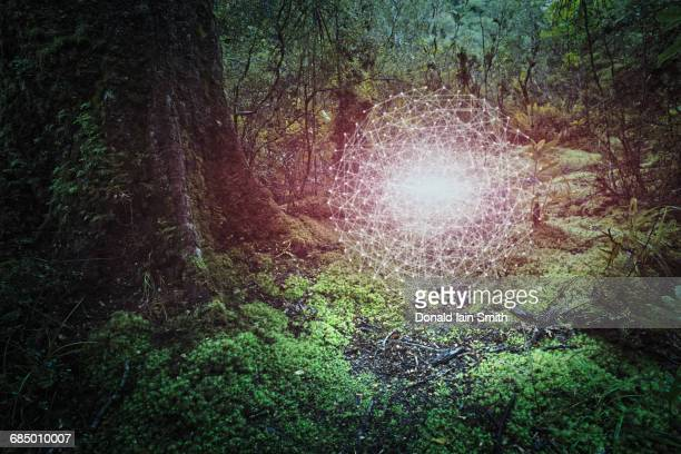 Glowing connected dots hovering in forest
