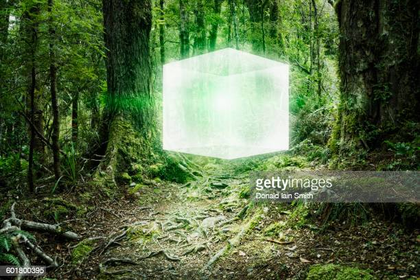 Glowing cube floating in forest