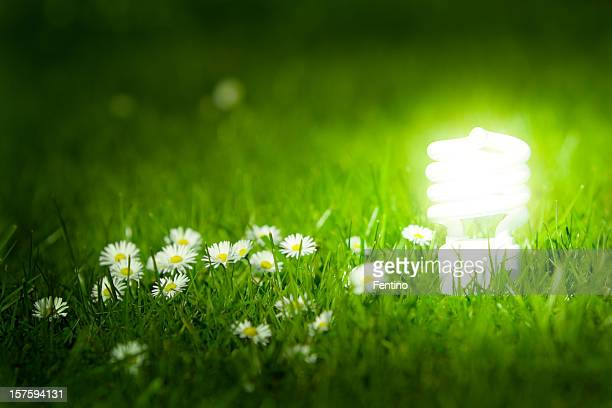Glowing energy saving bulb in green grass.