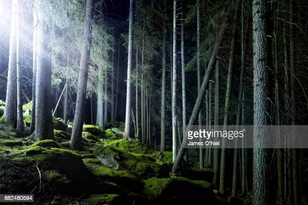 Glowing filtered light in forest