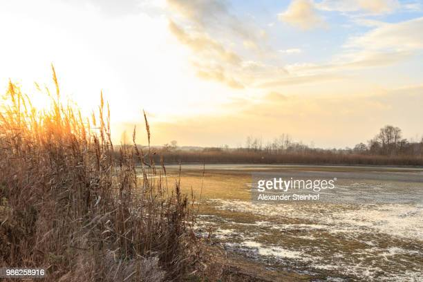 glowing gras - gras stock pictures, royalty-free photos & images
