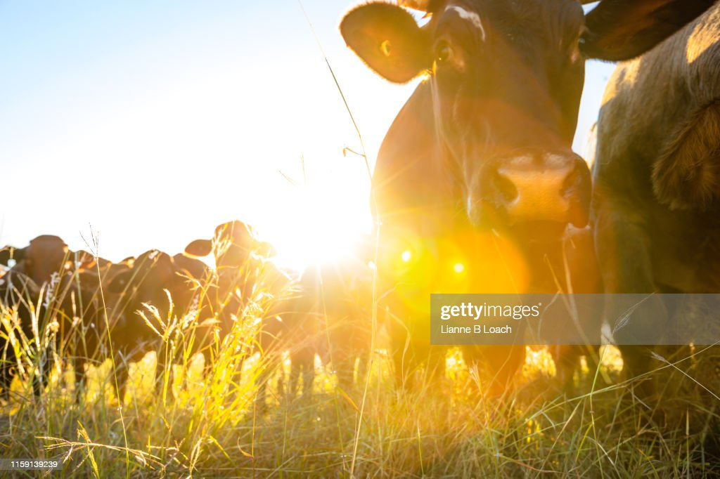 Glowing Grass : Stock Photo