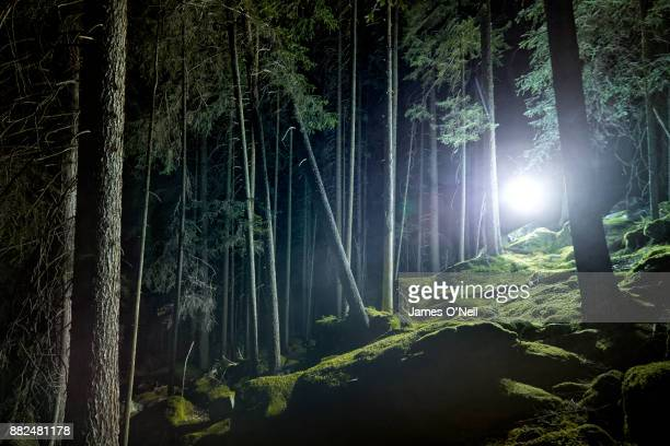 Glowing light in forest at night