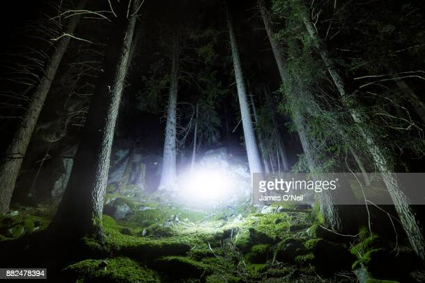 Glowing light in forest