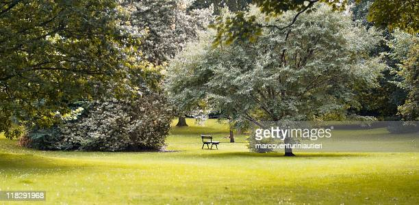 glowing light in the park, one lonely bench - marcoventuriniautieri stock pictures, royalty-free photos & images